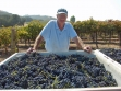 7 - The 2013 Harvest kicks off with a great start and beautiful Syrah clusters! Cheers.... Vintage!