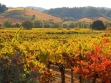 dry creek Fall_Dutcher_Crossing_Heritage_Zin sonoma