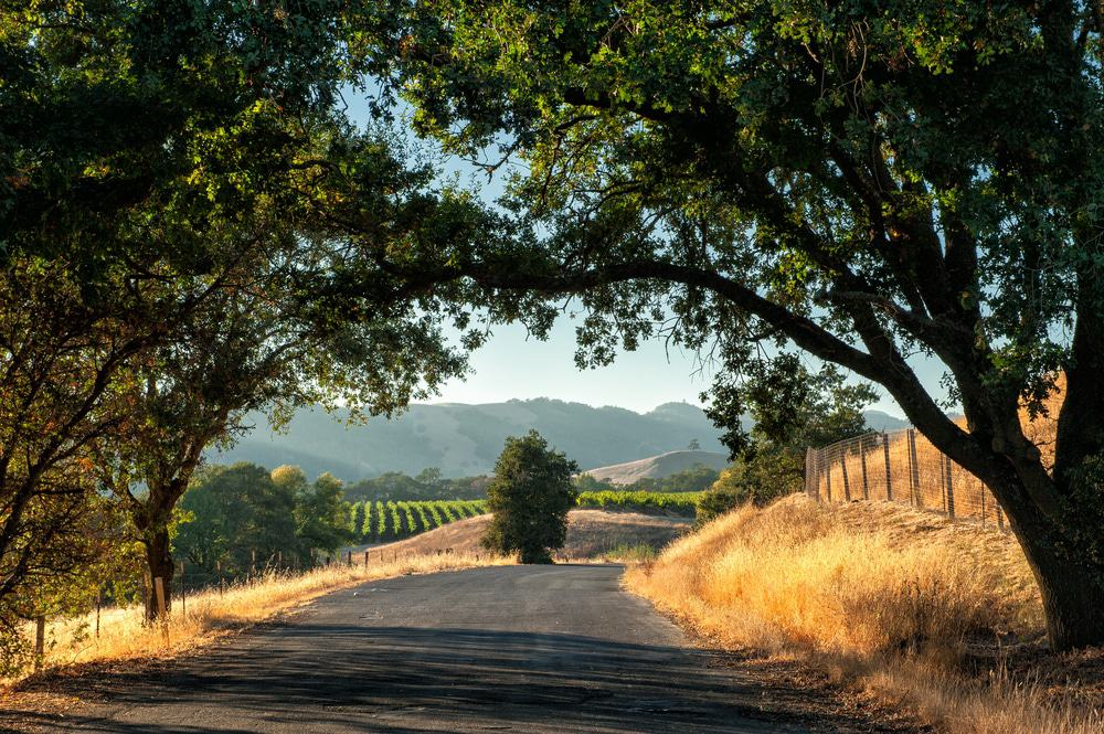 California Wine Country road