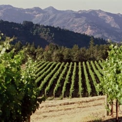 The 10 Best Napa Valley Wineries To Visit