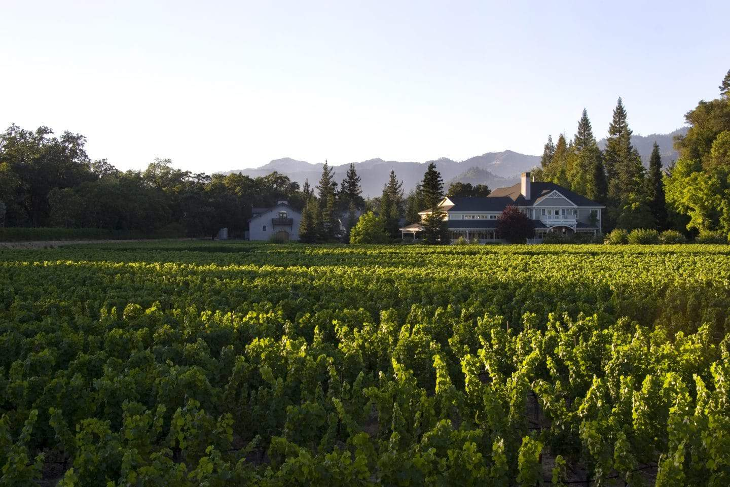 duck horn winery st helena