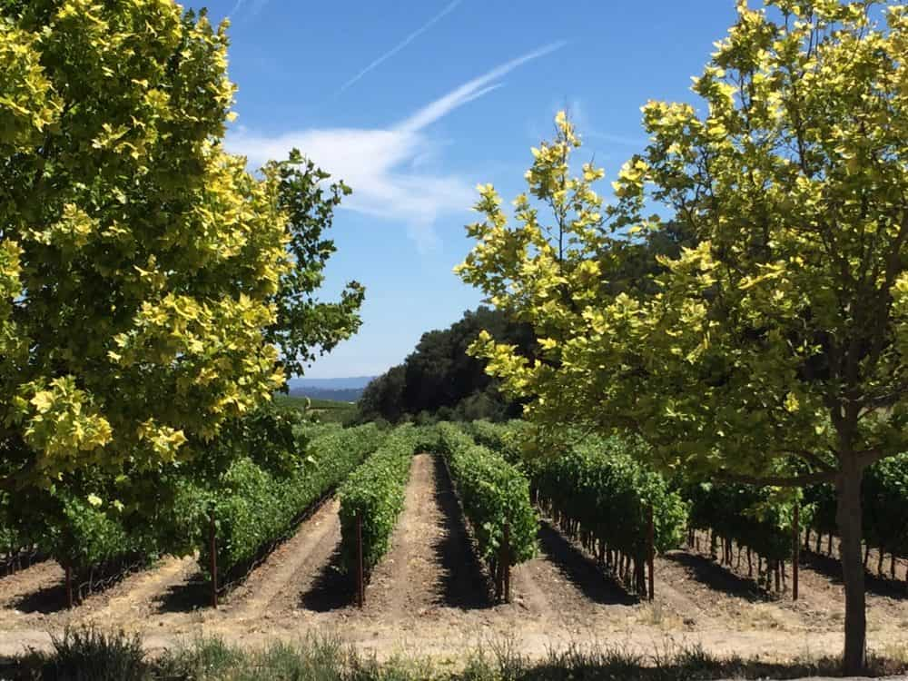 winery vineyards paso robles