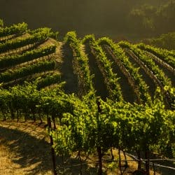 5  Tips For A Can't Miss California Wine Country Weekend