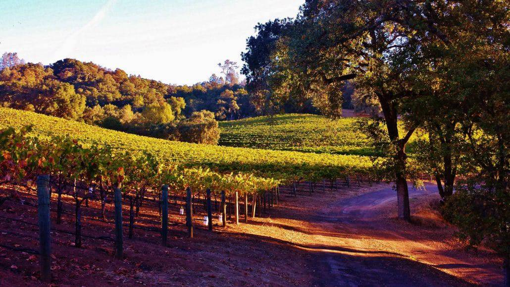 11 Top Sonoma Vineyard Hikes Best Wine Country