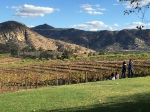 best san diego wineries