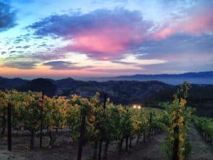 brian arden best calistoga wineries