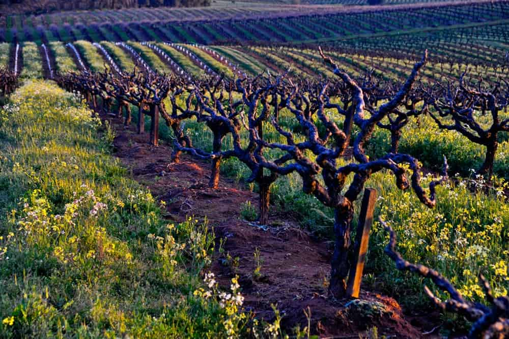 amador county best wineries