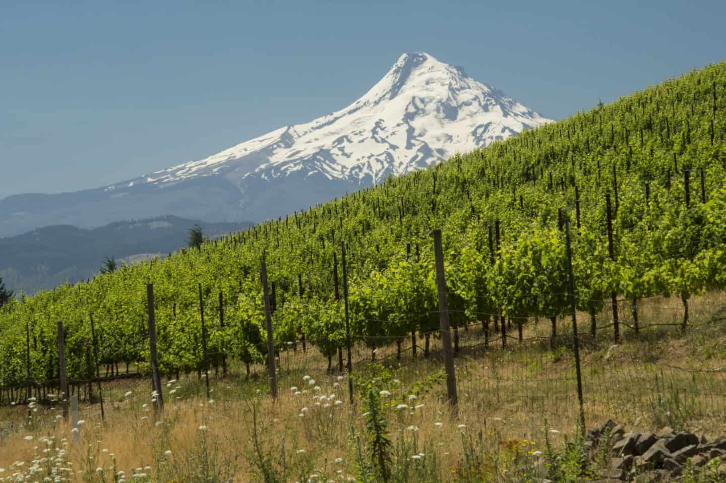 Underwood Vineyard, Columbia Gorge AVA, Washington Courtesy: Washington State Wine