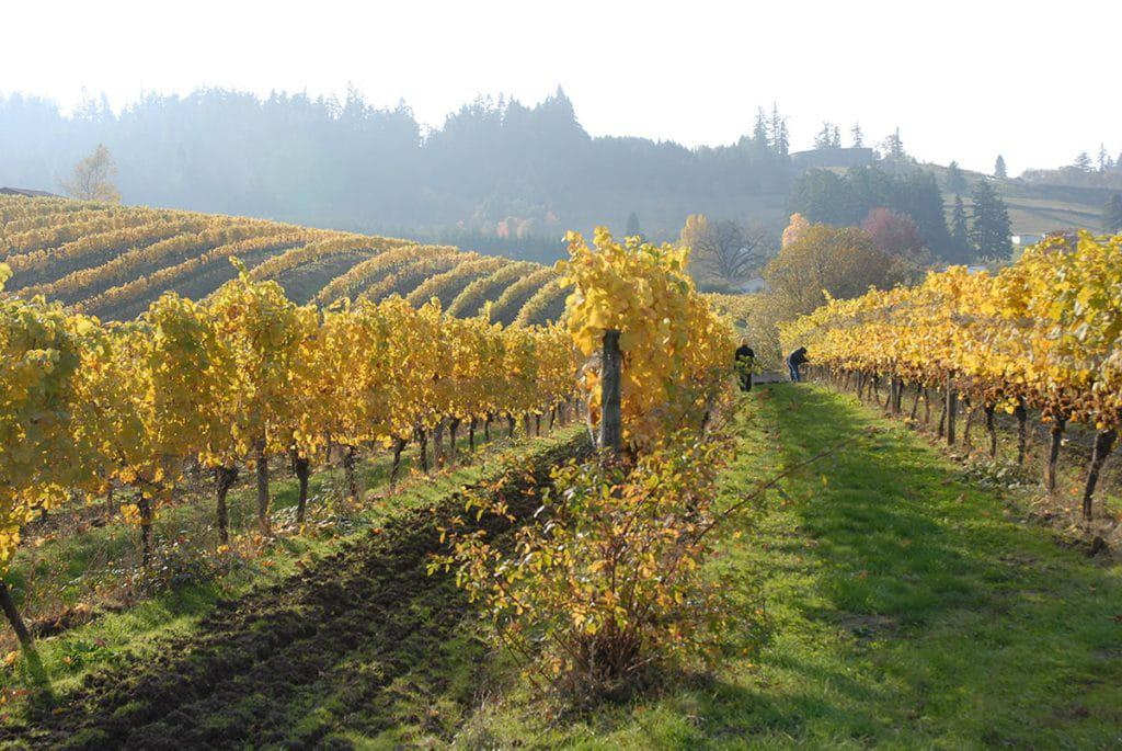 top willamette valley wine