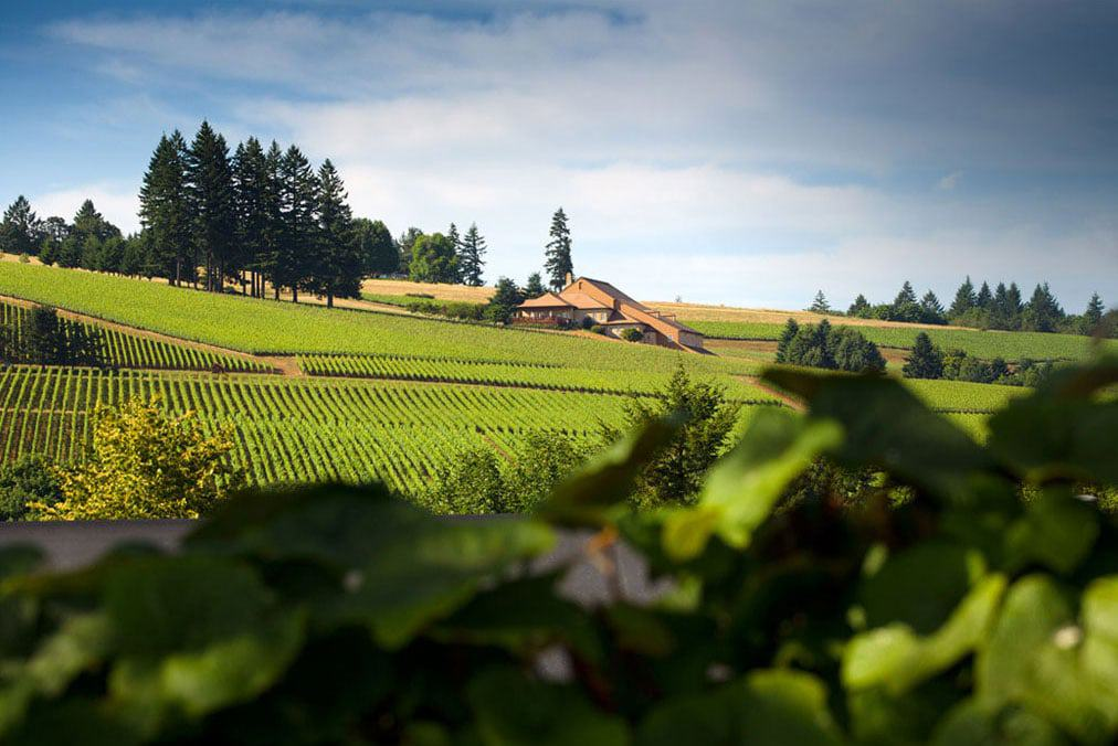 great oregon vineyards