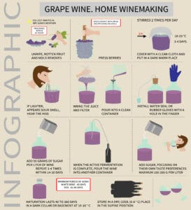 making wine at home infographic what do you need to buy to make wine at home